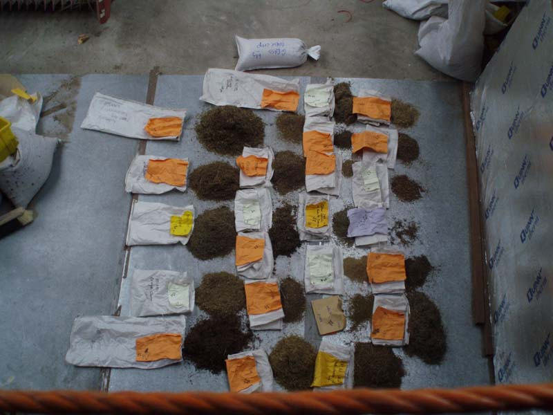 Collected seed from site for sowingImage by Michael Martyn