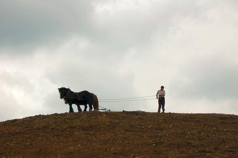 Horses-tilling EskerImage by Michael Martyn