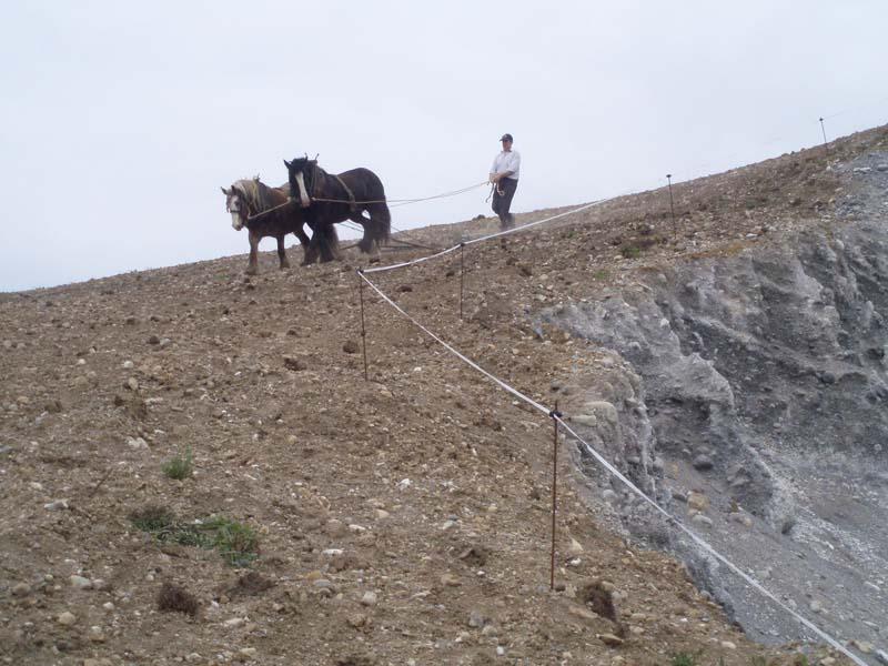 Horses-tilling on Esker slopeImage by Michael Martyn