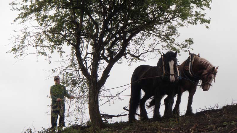 Horses tillingImage by Michael Martyn