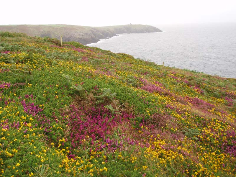 Beautiful site but undergrazed for choughImage by Michael Martyn