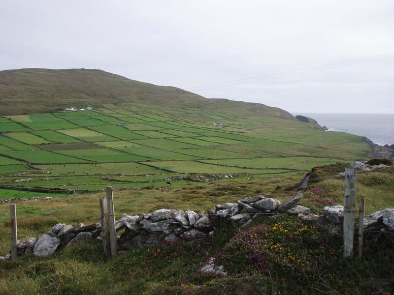 Chough Coastal Farmed LandscapeImage by Michael Martyn