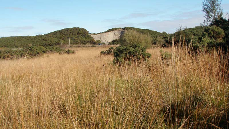 Disused quarry in esker on siteImage by Michael Martyn