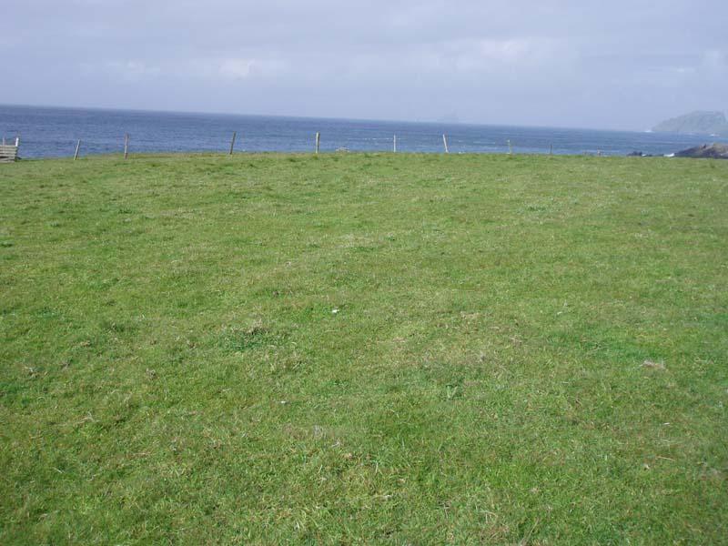 Improved Grassland well grazedImage by Michael Martyn